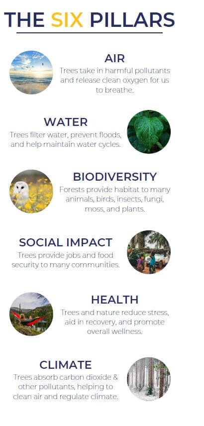 giving back to the community - six pillars of tree planting