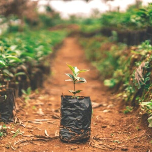 One+Tree+Planted